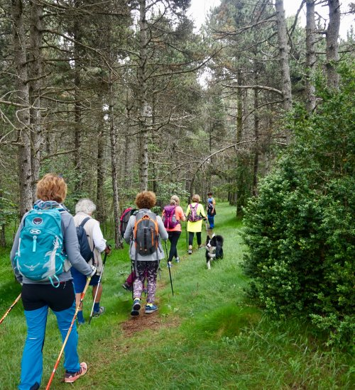 Nordic Walking Vall de Ribes