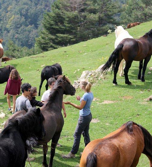 Dia entre cavalls lliures