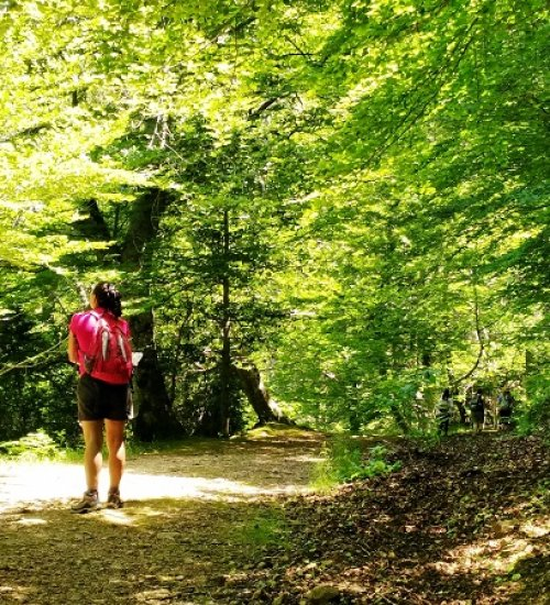 Sèlvans Forest Bathing in the Ports