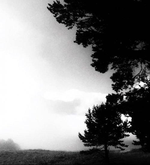Forêts et cascades