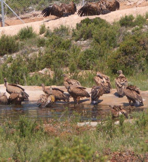 Birds of prey reed