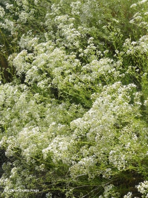Descobrint la flora Segarrenca