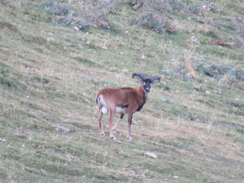 Observació de fauna de muntanya