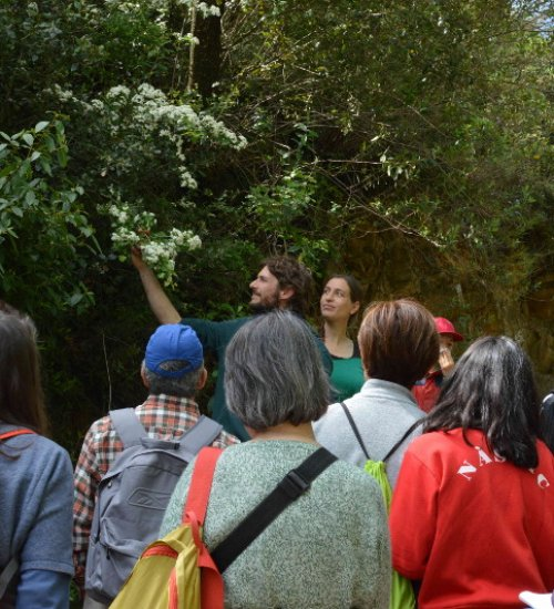 Excursion « À la découverte des plantes amies de l'environnement »