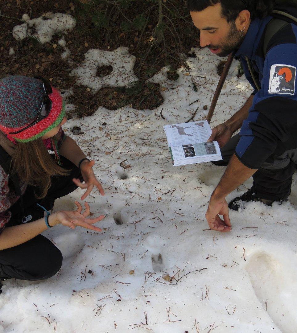 Taller de rastreig de fauna salvatge