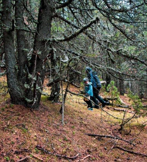 Tresors del Parc Natural pel Massís de l'Orri